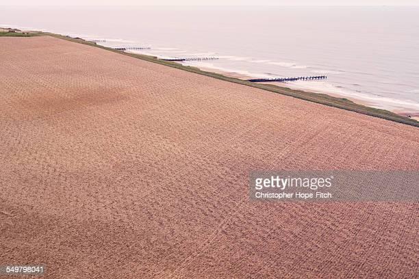 Coastal field