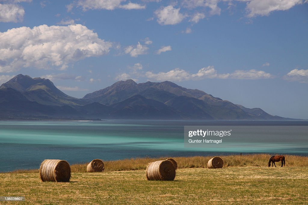 Coastscape with hay bales and horse
