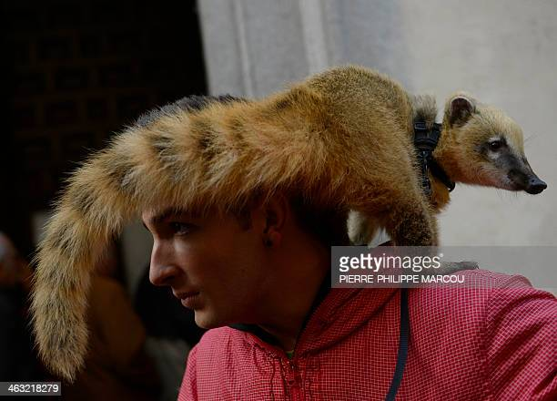 A coati owner queues with his pet to have it blessed by a priest at San Anton church in Madrid marking Saint Anthony's Day on January 17 2014 Dogs...