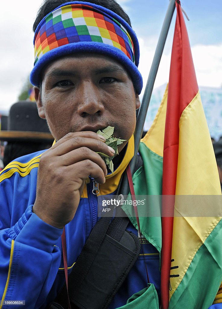 A coca grower chews coca leaves during a celebration for the reincorporation of Bolivia to the UN Convention Against Illicit Traffic in Narcotic Drugs in La Paz on January 14, 2013. 'The coca leaf is not any more seen as cocaine (..), it is a victory of our identity' said Bolivian President Evo Morales. AFP PHOTO/Jorge Bernal