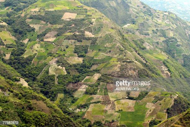 Coca plantations in las Yungas 100km from La Paz 12 October 2007 In the eastern range of the Yungas region some 100km from La Paz the coca cultures...