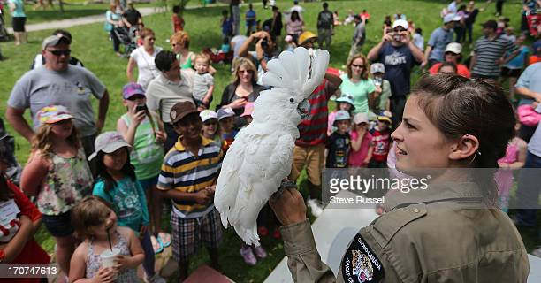 Cockatoo Cookie is shown off at Burlington's Brant Street Pier as it opens accompanied by the Sound of Music festival along Spencer Smith Park on...