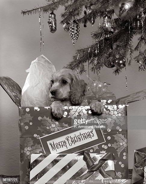 Cocker Spaniel Puppy In Partially Unwrapped Gift Box Under Christmas Tree