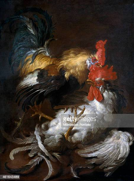 Cockfight by Giovanni Agostino Cassana also known as Abate Cassana 17th 18th Century oil on canvas 91 x 735 cm Italy Veneto Padua Civic Museums...