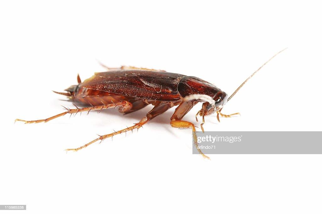 Cockroach 02 : Stock Photo