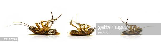 ゴキブリ extermination