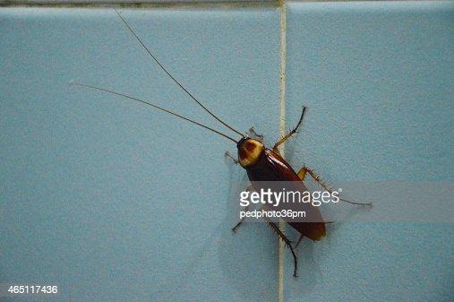 Kuchenschabe An Badezimmerwand Stock Foto Thinkstock