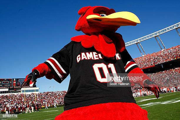 Cocky the South Carolina Gamecocks mascot celebrates a first half touchdown against the Clemson Tigers at WilliamsBrice Stadium on November 28 2009...