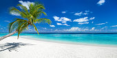 tropical paradise beach with white sand and coco palms travel tourism wide panorama background concept