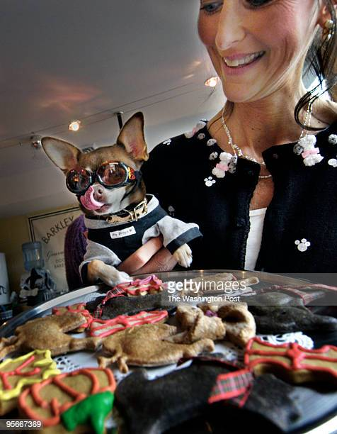 CoCo' the Chihuahua held by Christina Bobertson licks his jaws as he is held up to a platter of decorative dog buscuits at the Barkley Square Dog...