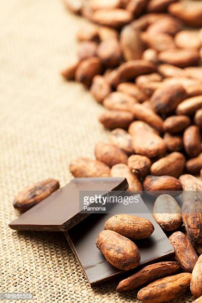 Fève de cacao dans le chocolat
