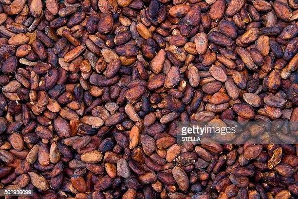 Cocoa beans, La Maison du Cacao, Pointe-Noire, west coast of Basse-Terre, Guadeloupe, French Antilles, Lesser Antilles, Caribbean