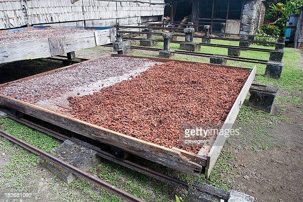 Cocoa Drying