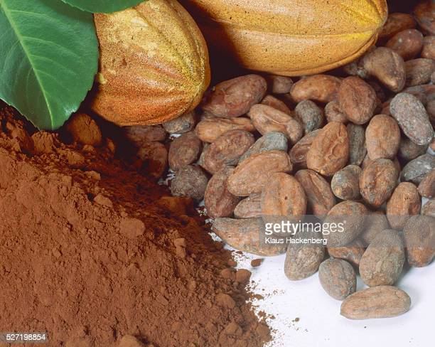Cocoa flux with cocoa bean and cocoa fruit