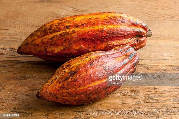 Fruto do cacau-género alimentício