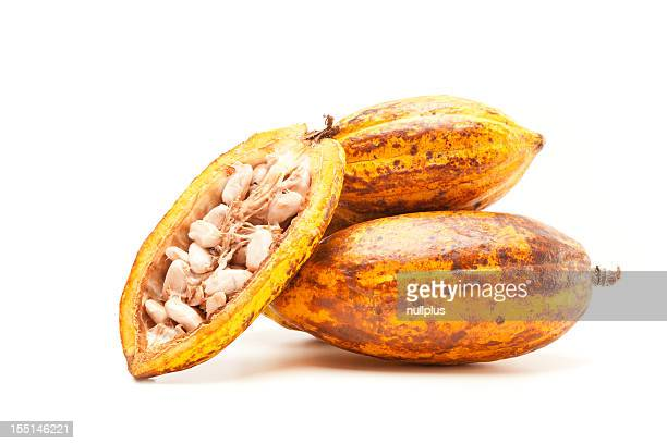 cocoa pods on white