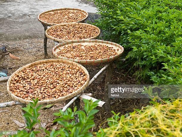 Marron cacao draying sur le soleil