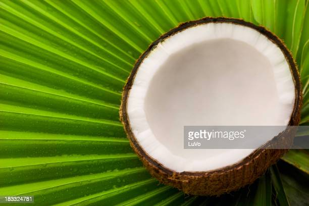 Coconut and palm tree leaf