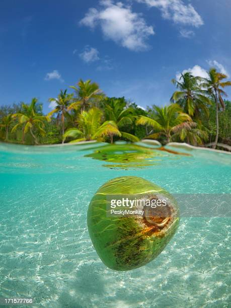 Coconut Floating in Tropical Waters Palm Tree Beach