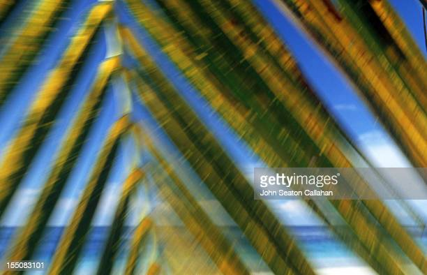 Coconut frond, on beach of tropical island