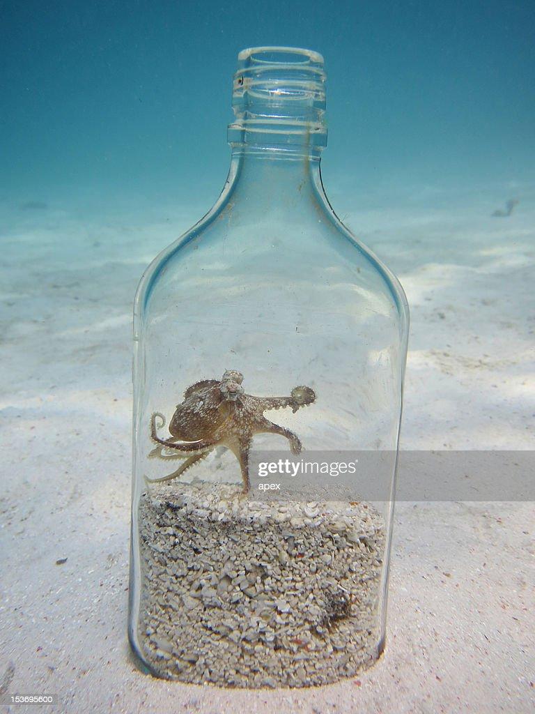 Coconut Octopus : Stock Photo