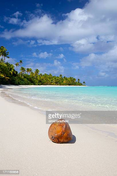 Coconut On South Pacific Beach