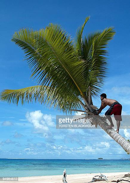 A coconut palm succumbs to sand erosion on the shore of Tepuka Islet on Funafuti Atoll 22 February 2004 as rising sea levels inundate many of...