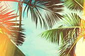 Coconut palm tree under blue sky. Vintage background. Travel card. Vintage effect