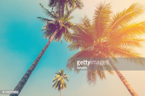 Coconut palm tree with vintage effect. : Stock Photo