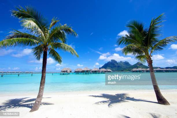Coconut Palm Trees in Bora-Bora Island