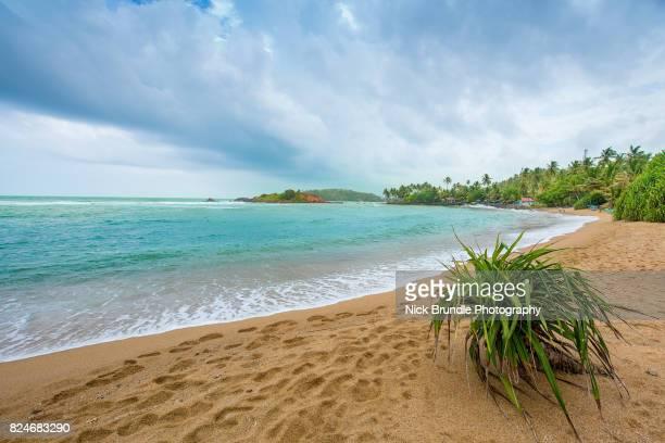 Coconut palm trees of tropical sandy beach, Mirissa, Sri Lanka