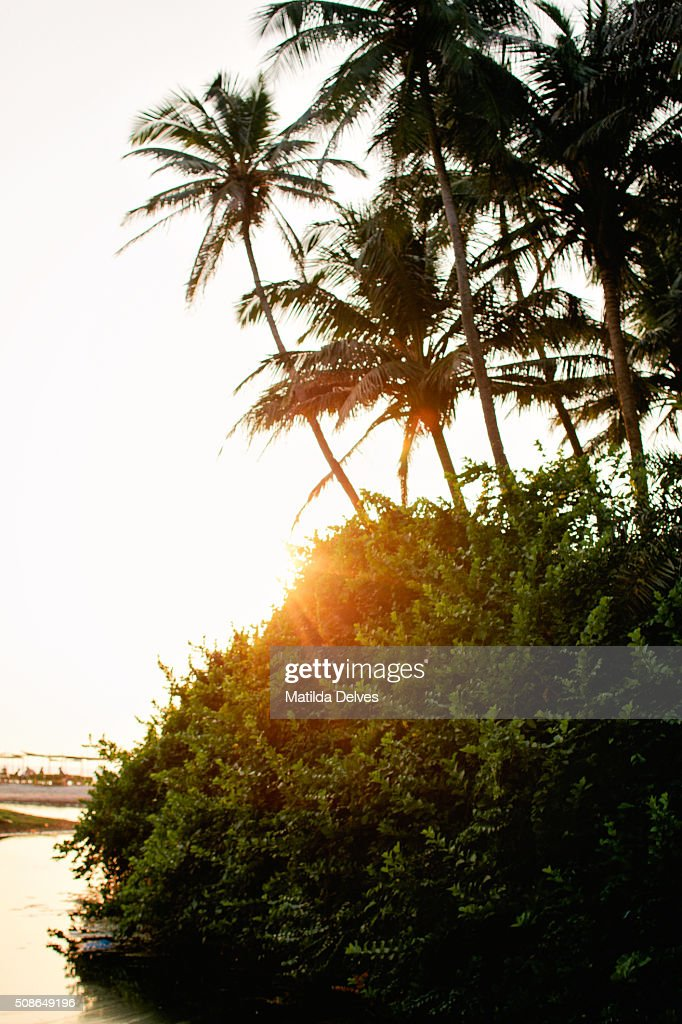 Coconut palm trees on Palolem beach, Goa, India : Stock Photo