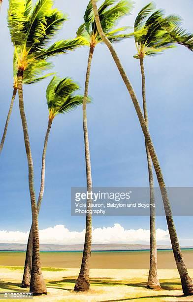 Coconut Palms Along Molokai's South Shore