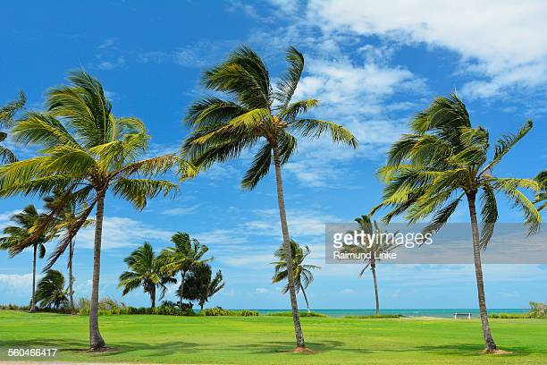 Coconut Palms in the Summer