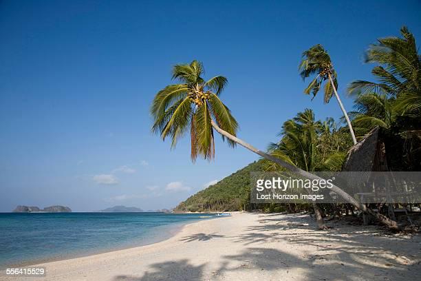 Coconut palms on a tropical beach, El Nido, Philippines
