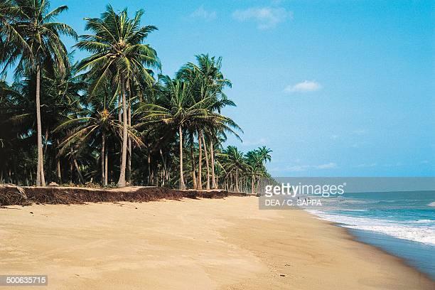 Coconut palms on the beach in Cotonou Benin
