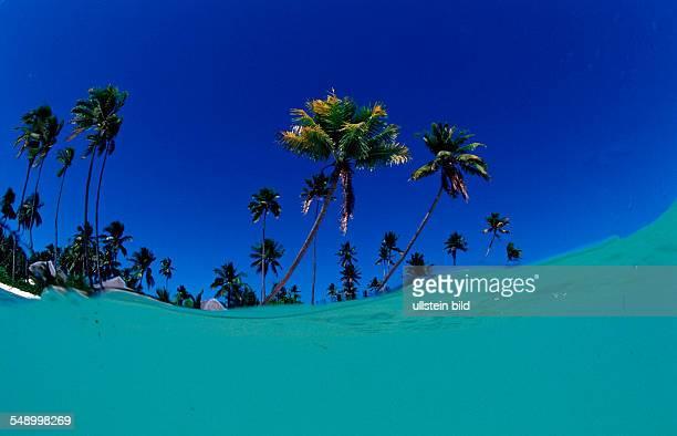 Coconut palms on the sandy beach Indonesia Wakatobi Dive Resort Sulawesi Indian Ocean Bandasea