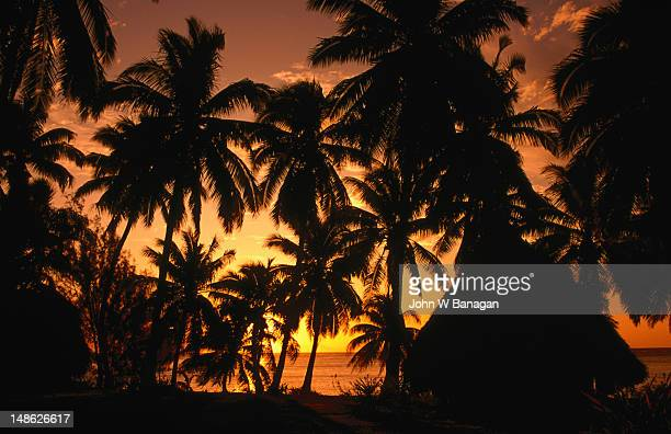 Coconut palms over Aitutaki lagoon.