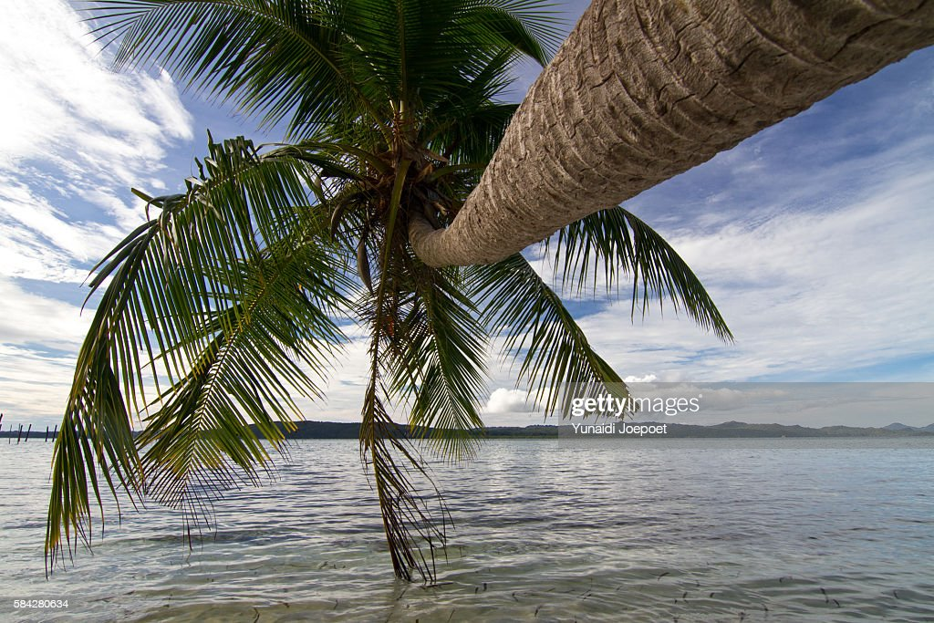 Coconut Tree and Beautiful Beach