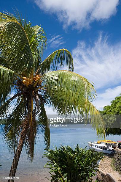 Coconut tree and harbour.