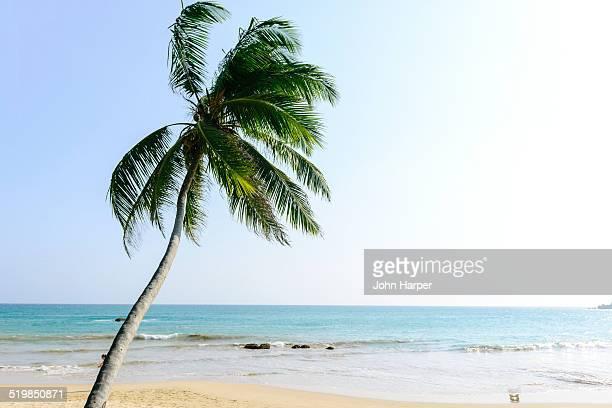 Coconut tree on idyllic beach