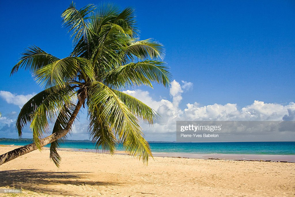 Coconut tree on the beach with sky : Stock Photo