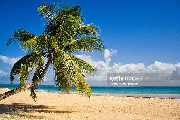 Coconut tree on the beach with sky