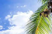 Coconut tree over summer sky, nature concept background, summer season, holiday and vacation