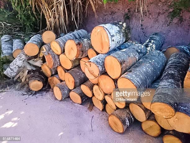 coconut tree trunk.