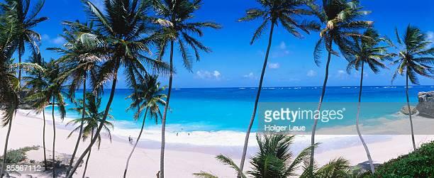 Coconut trees along Bottom Bay.