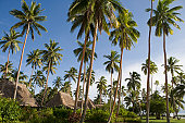 Coconut trees and bures at Jean-Michel Cousteau Resort.