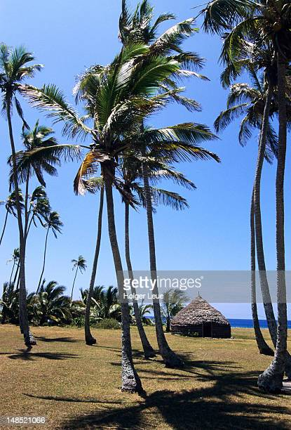 Coconut trees and traditional hut, Mou.