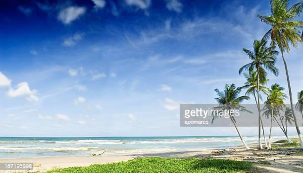 Kokospalmen in einem weißen Sandstrand