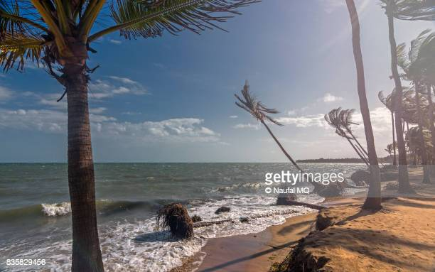 Coconut trees losing ground to the sea in Ramanathapuram